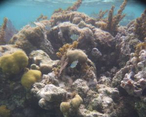 Avis - Plongée en apnée Maya Riff à Xcalak