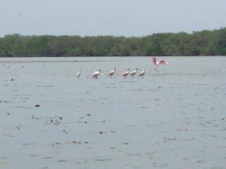 Avis - Lagune Tres Palos