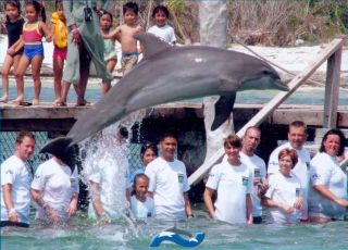 Reviews- Swimming with dolphins Cancun