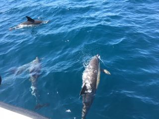 Reviews- Dolphin Watching Lagos