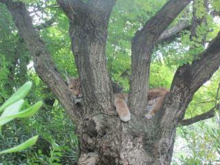 Reviews- Zoological Park  Punta Verde