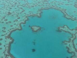 Wielka Rafa Koralowa / Reef Heart