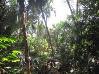 Recenze Botanická zahrada George Brown Darwin