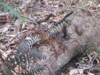 Avis - Manly to Spit Bridge Scenic Walkway