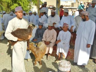 Reviews- Cattle market Nizwa