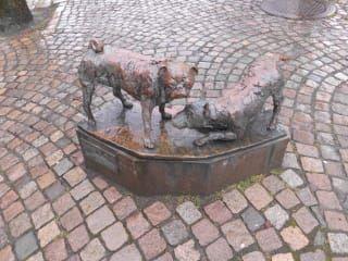 Avis - Marché Fischhalle Feskekörka
