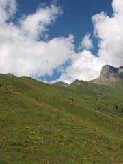 Góra Faulhorn