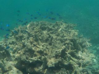 Reviews- Nemo Dolphin Glass Bottomed Boat  Beau Vallon Bay