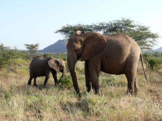 Samburu - Rezerwat Narodowy