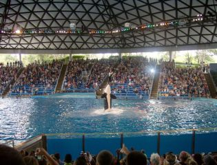 Reviews- Seaworld