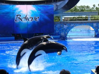 Reviews- Sea World Florida