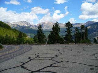 Avis - Parc national des Montagnes Rocheuses
