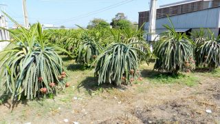 Delta rzeki Mekong