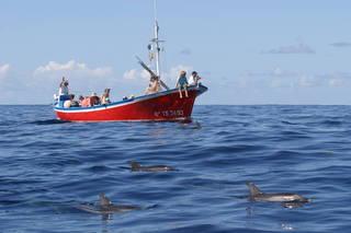 Avis - Observation des baleines Oceano Valle Gran Rey