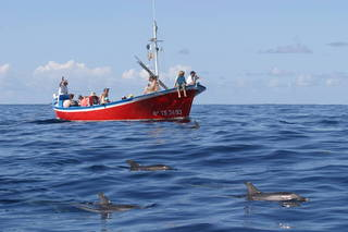 Obserwacje wielorybów Oceano Valle Gran Rey