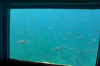 Reviews- Vision submarine ride
