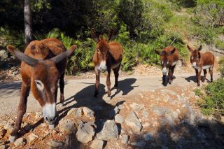 Reviews- Cala Murta