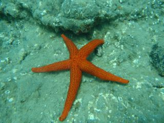 Reviews- Snorkeling Tarajalejo