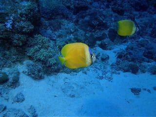 Reviews- Diving Blue Bay