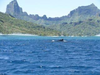Avis - Observation des baleines