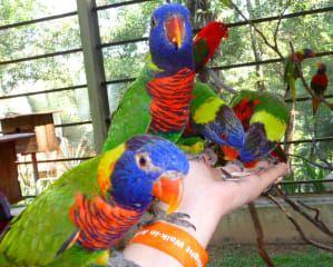 Parki Lake Gardens