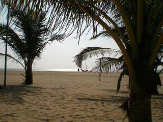Avis - Voyage Negombo