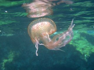 Avis - Plongée sous-marine Comino