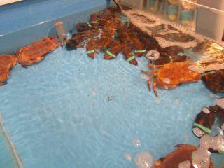 Wissembourg Einkaufen