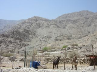 Avis - Montagnes Hajar