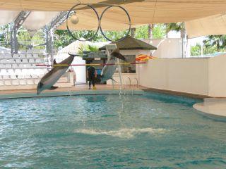 Reviews- Dolphinarium Kemer