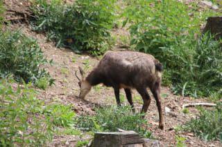 Recensioni - Parco Steinwasen