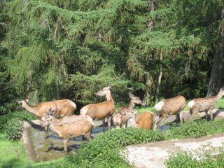 Park Dzikich Zwierząt Edersee