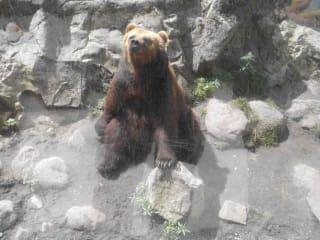 Wildpark Lüneburger Heide Karte.Bewertungen Wildpark Lüneburger Heide In Visselhövede Holidaycheck