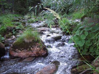 Rzeka Bode