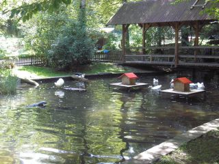 Reviews- Schongauer Fairytale Forest and Wildlife Park