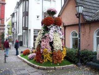 Wystawa kwiatów Chrysanthema