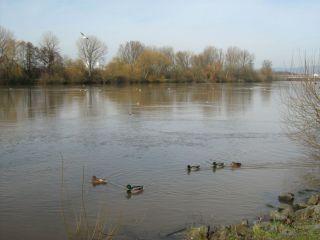 Rzeka Fulda