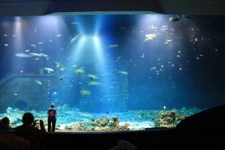 ZOO Tropen Aquarium Hagenbeck