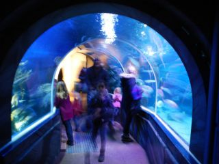sea life center aqua dome atrakcja turystyczna berlin berlin mitte. Black Bedroom Furniture Sets. Home Design Ideas