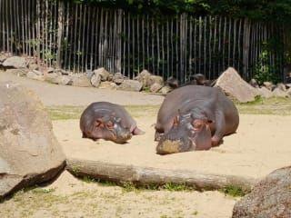 Avis - Zoo de Cologne