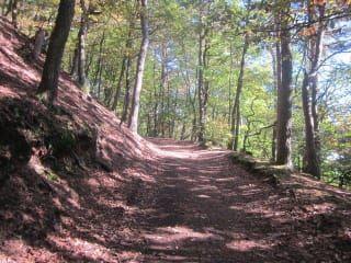 Avis - Madenburg