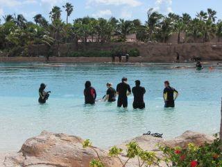 Pływanie z delfinami Dolphin Cay Paradise Island