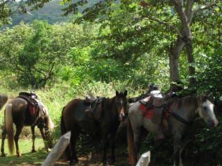 Jazda konna La Hacienda Ranch Samana