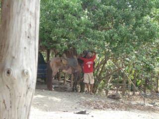 Reviews- Hacienda Ranch