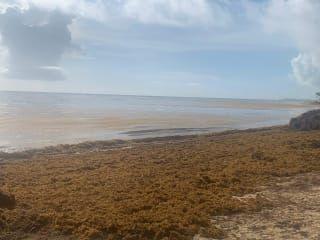 Reviews- Uvero Alto Beach