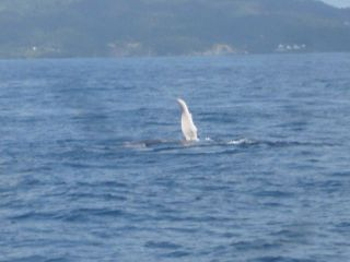 Reviews- Whale Watching Boat Trip