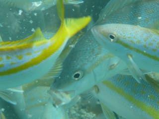 Reviews- Snorkeling Isla Paraiso