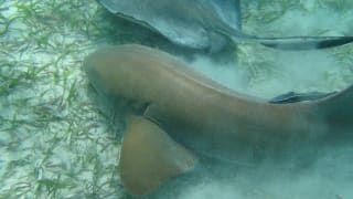 Snurkowanie Shark Ray Alley