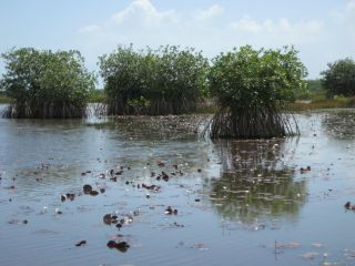 Reviews- Belize Airboat Tour