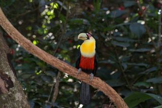 Avis - Parc das Aves